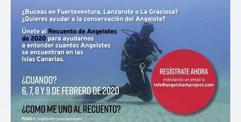 Recuento de Angelotes en Lanzarote, Fuerteventua y La Graciosa